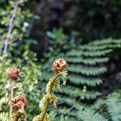 Ferns Cathedral Caves, Catlins