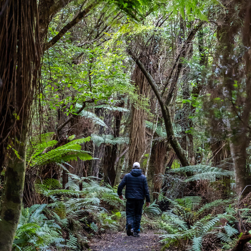 Walk through rainforest to Cathedral Caves, Catlins