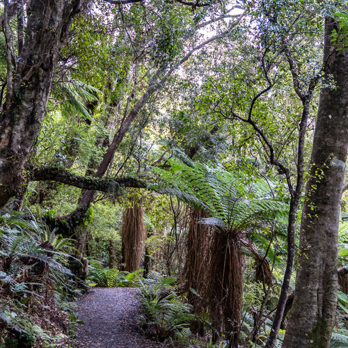 Forest walk Cathedral Caves Catlins